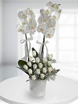 Orkide ve Beyaz Güller 2