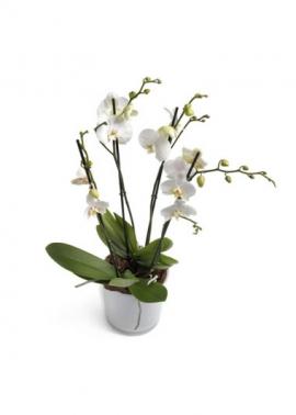 Seramik Vazoda 4 Dal Beyaz Orkide