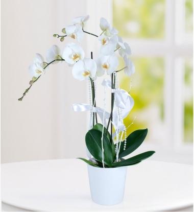 İzmir Çiçekçi Saksı Orkide