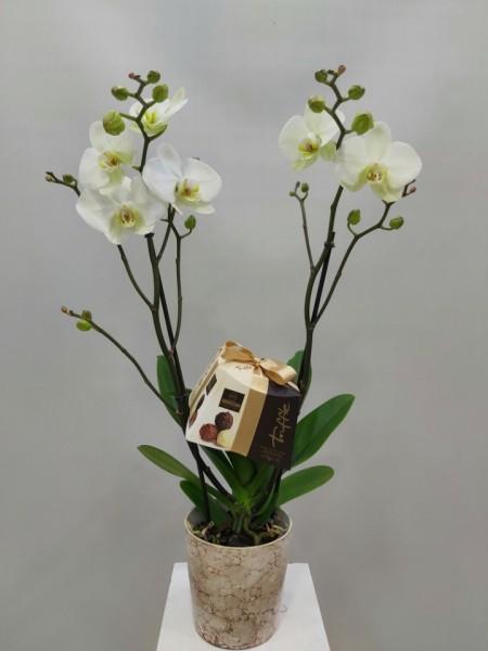 Orkide Truffle Çikolata