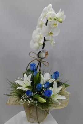 Gül Lilyum Orkide