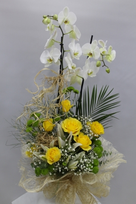 Orkide Gül