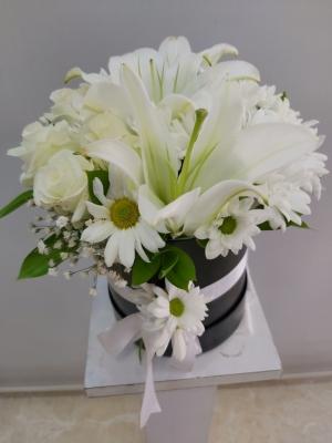 Kutuda Papatya lilyum Beyaz Gül