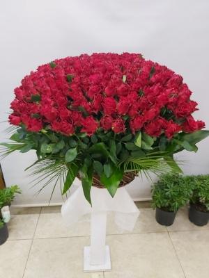 Gül Sepeti 250 Kırmızı Güller